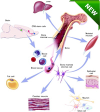 Stem Cell Nutrition Therapy. stem